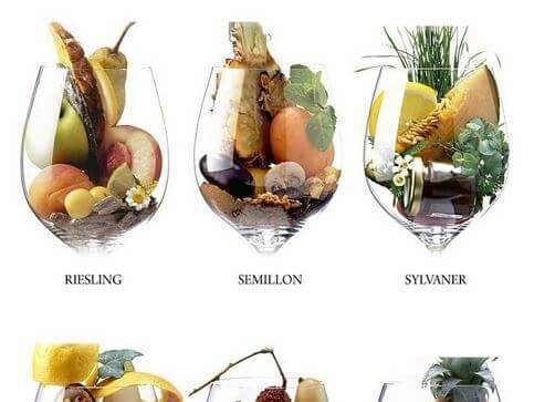 víno aróma a buket rozdiel