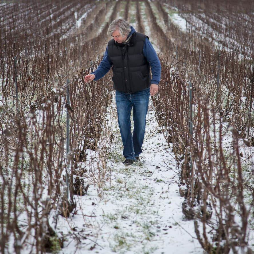 Champagne J.L. Vergnon vinice v zime