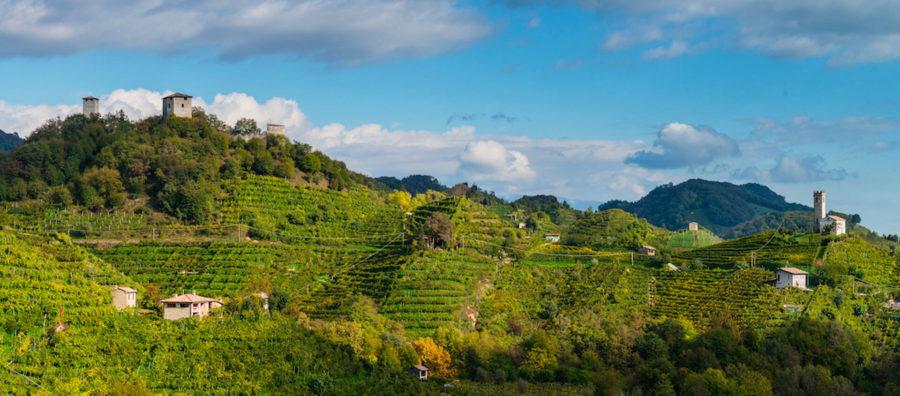 Carpenè Malvolti vinohrady