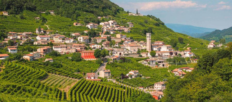 Carpenè Malvolti vinice