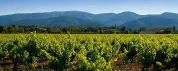 Cave Poulet&Fils vinohrady