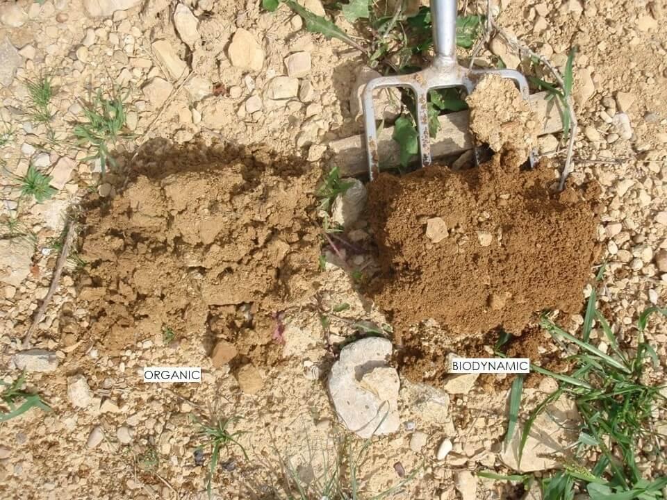 pôda biodynamika vs. organika