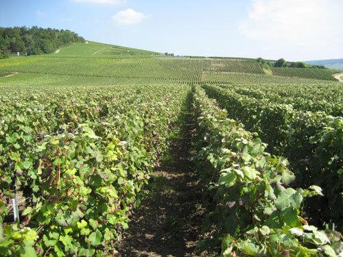 Champagne J. Charpentier vinice