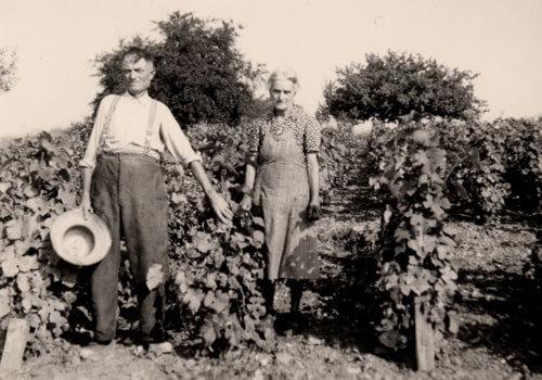 Champagne J. Charpentier vinica v minulosti