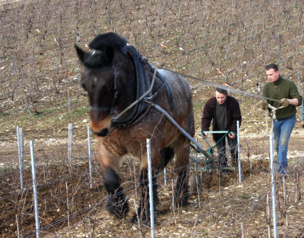 oranie koňom biodynamika