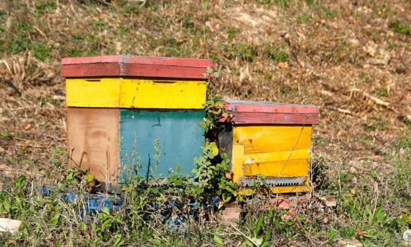 Domaine Roche – Audran včelí úľ