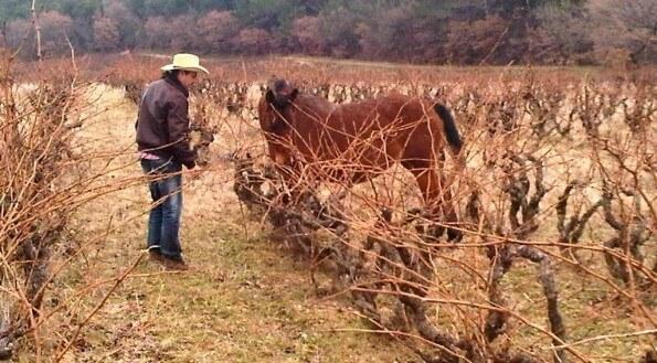 Domaine Roche – Audran kôň vo vinici