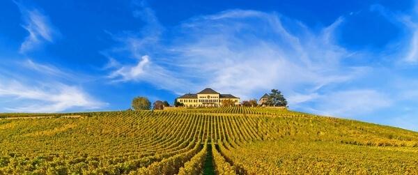 Schloss Johannisberg vinice