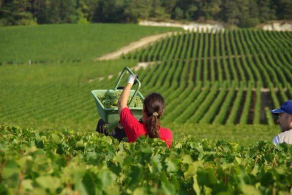 Champagne Soutiran vinohrady