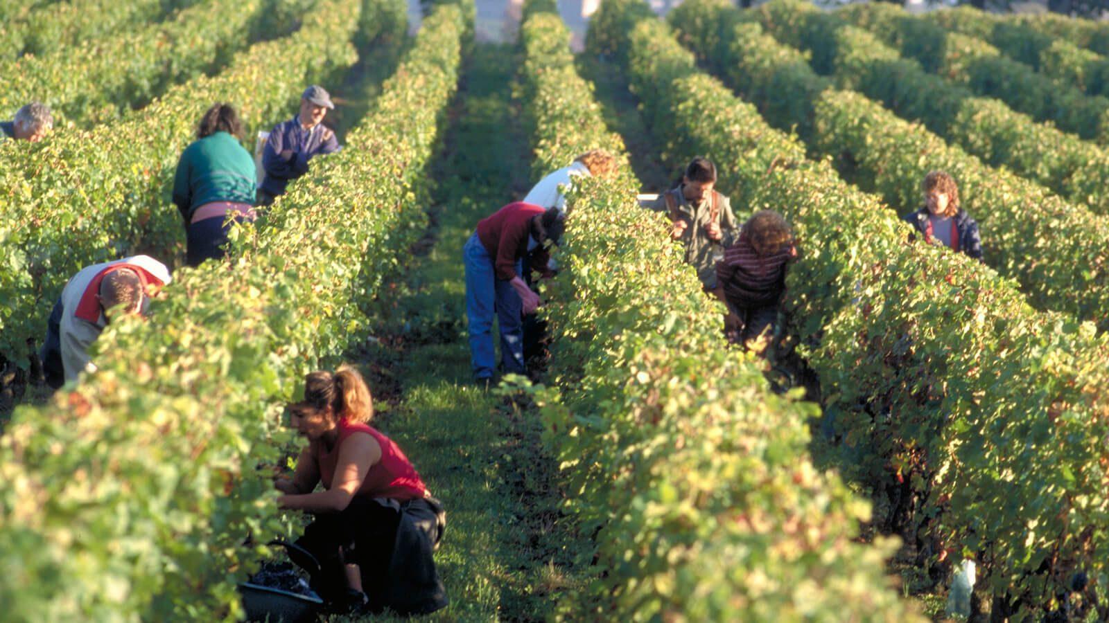 oblasť vína bordeaux